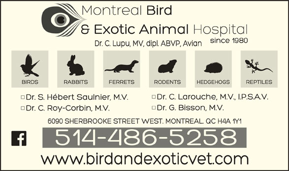 Veterinarian Hospital for Birds & Exotics (514-486-5258) - Display Ad -