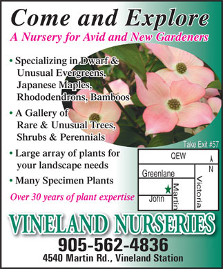 Vineland Nurseries (905-562-4836) - Annonce illustrée - Come and Explore A Nursery for Avid and New Gardenersursery for Avid and New Gardeners Specializing in Dwarf & Unusual Evergreens, Japanese Maples, Rhododendrons, Bamboos A Gallery of Rare & Unusual Trees, Shrubs & Perennials Take Exit #57 Large array of plants for QEW your landscape needs Greenlane ictoria N Martin Many Specimen Plants Over 30 years of plant expertise John VINELAND NURSERIES 905-562-4836 4540 Martin Rd., Vineland Station